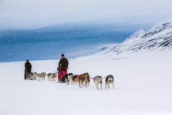 Dog Sledding, Longyearbyen
